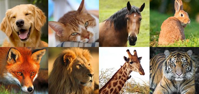 versi animali
